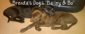 """Brenda's Dogs """"Bailey & Bo"""""""